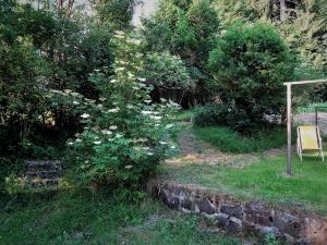 Garten mit Hollunderstrauch Haus Sabina